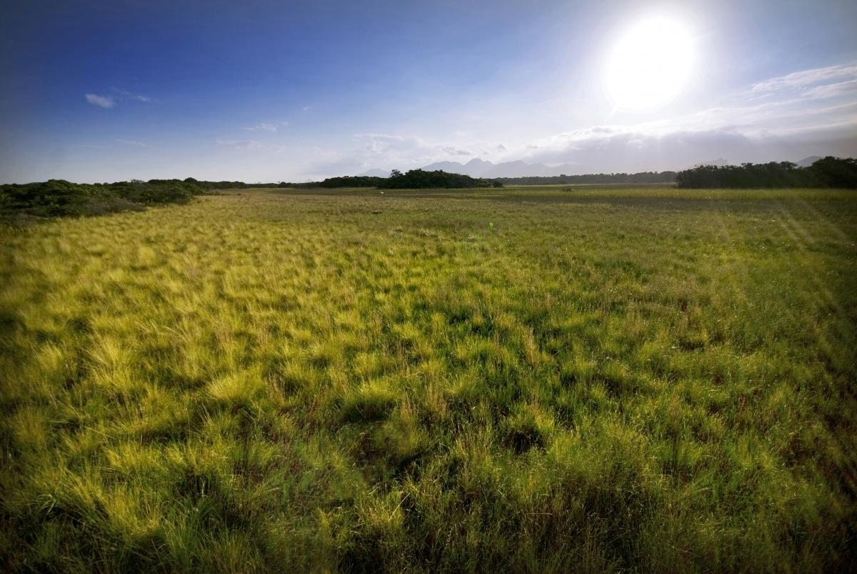 A new study shows that dryness of the atmosphere affects U.S. grassland productivity more than rainfall does. Photo by Leonardo Mercon/Shutterstock